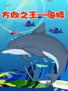 小笨熊之方向之王—海豚