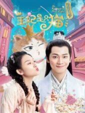 報告王爺王妃是只貓第一季
